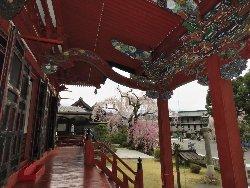 祖師堂と枝垂れ桜