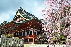 報恩閣と枝垂れ桜